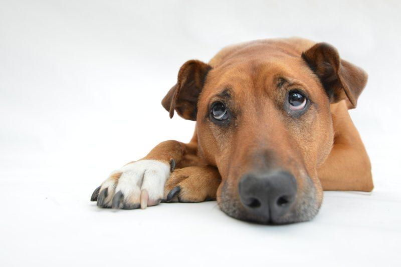 Comment éviter de perdre son animal de compagnie?