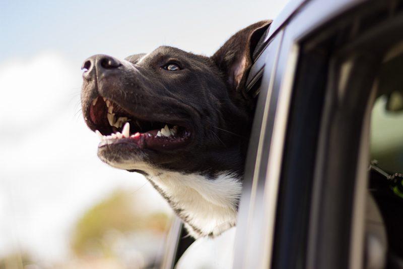 Illustration d'un chien heureux