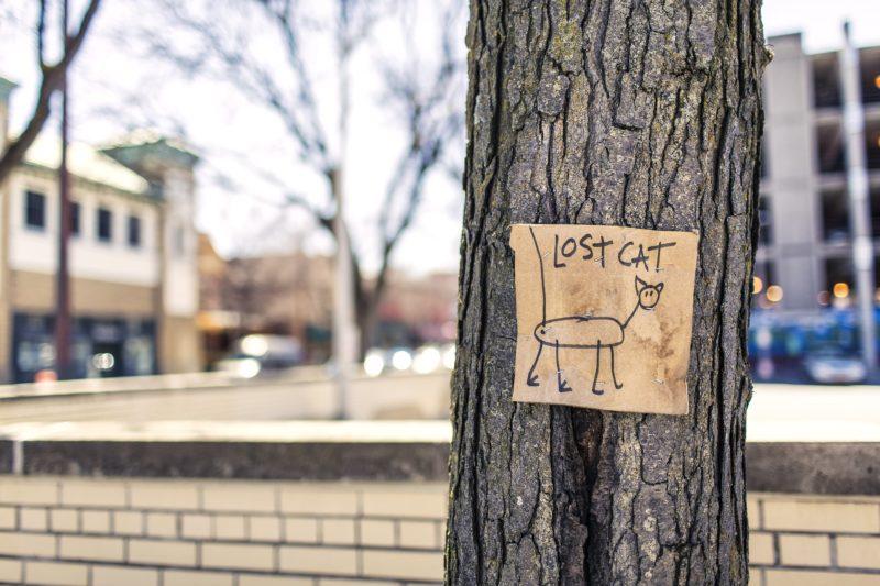 Affiche chat perdu