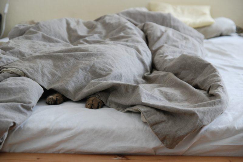 Chat caché dans un lit